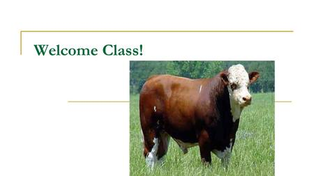 Welcome Class! Objectives Describe the ruminant digestive system.  1 Stomach, 4 Compartments Functions How they change with maturity Identify the primal.
