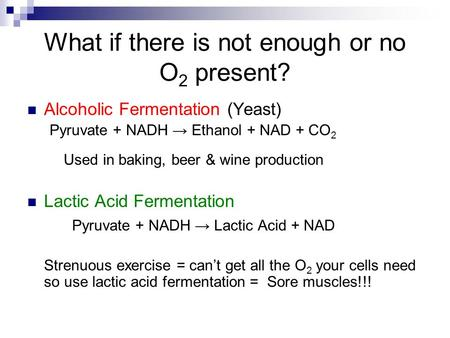 What if there is not enough or no O 2 present? Alcoholic Fermentation (Yeast) Pyruvate + NADH → Ethanol + NAD + CO 2 Used in baking, beer & wine production.