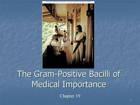 1 The Gram-Positive Bacilli of Medical Importance Chapter 19.
