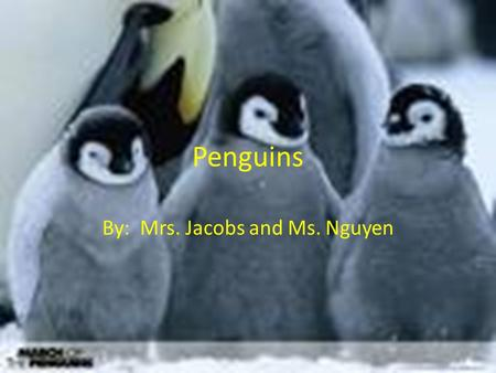 Penguins By: Mrs. Jacobs and Ms. Nguyen. What It Looks Like (Characteristics) All penguins have: a dark back and white front, though each species displays.