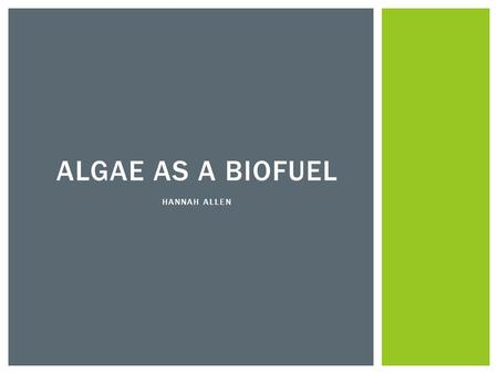 ALGAE AS A BIOFUEL HANNAH ALLEN. ALGAE RANGES FROM MICROSCOPIC CYANOBACTERIA TO GIANT KELP CONVERTS SUNLIGHT -> ENERGY VIA PHOTOSYNTHESIS GREAT DIVERSITY.