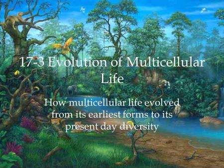 17-3 Evolution of Multicellular Life How multicellular life evolved from its earliest forms to its present day diversity.