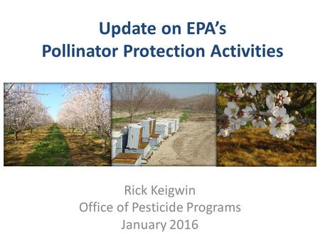 Update on EPA's Pollinator Protection Activities Rick Keigwin Office of Pesticide Programs January 2016.