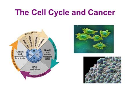 The Cell Cycle and Cancer. How do we define cancer? Cancer is: 1. a disease of the cell cycle. 2. a group of disorders that cause some of the body's cells.
