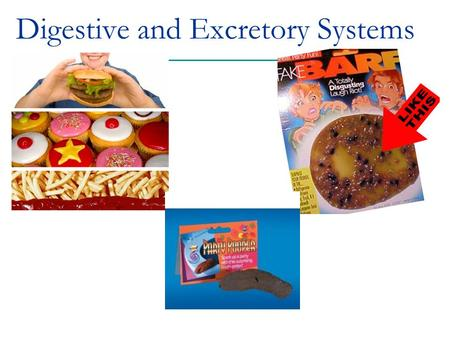 "Digestive and Excretory Systems. What is ""digestion"" Process of breaking down food into simpler molecules that can be absorbed by the body  Break up."