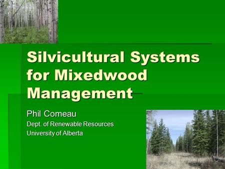 Silvicultural Systems for Mixedwood Management Phil Comeau Dept. of Renewable Resources University of Alberta.