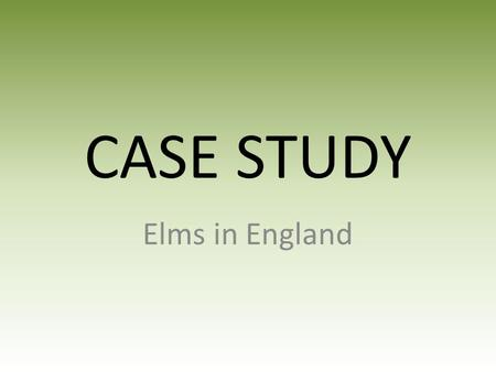 CASE STUDY Elms in England. English Elm (Ulmus procera) Thought of as a native tree but most likely brought to Britain by the Romans about 2,000 years.
