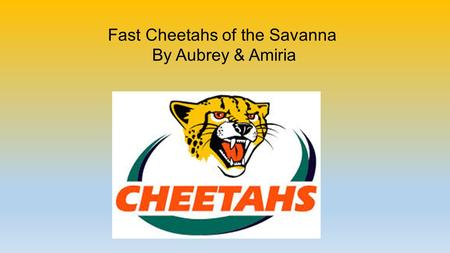 Fast Cheetahs of the Savanna By Aubrey & Amiria. Fast Facts About Cheetahs  They can run as fast as 60 or 70 miles per hour for short distances.  They.