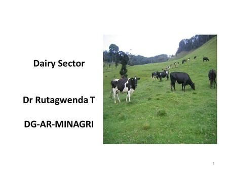 Dairy Sector Dr Rutagwenda T DG-AR-MINAGRI 1. Restocking Introduction of new breeds Crossbreeding of local cows One cow per poor family Land reform (2008)