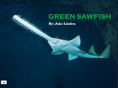 By: Jake Linden. Diet  Green saw fish mainly eat fish that are smaller than themselves, they also eat Crustaceans and Mollusks.