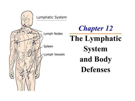 Chapter 12 The Lymphatic System and Body Defenses.