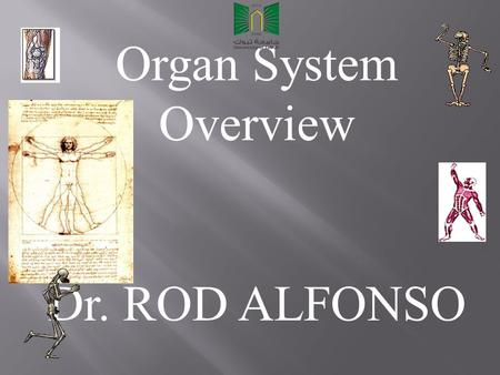 Organ System Overview Dr. ROD ALFONSO. How do Humans and other complex mammals maintain homeostasis? They must carry out all needed life functions in.