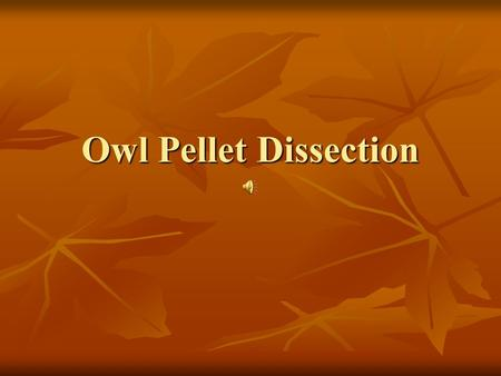 Owl Pellet Dissection EQ: Describe the flow of energy and the cycling of matter within an ecosystem.