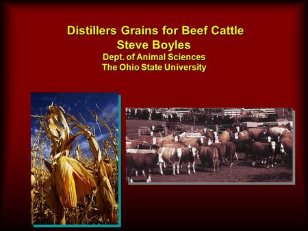 Distillers Grains for Beef Cattle Steve Boyles Dept. of Animal Sciences The Ohio State University Distillers Grains for Beef Cattle Steve Boyles Dept.