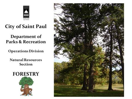 City of Saint Paul Department of Parks & Recreation Operations Division Natural Resources Section FORESTRY.