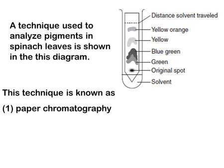 A technique used to analyze pigments in spinach leaves is shown