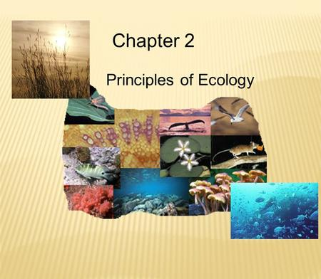 Chapter 2 Principles of Ecology.  What is the difference in an Autotroph & Heterotroph? Producer & Consumer?  Write the equation for Photosynthesis.