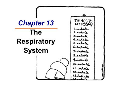 Chapter 13 The Respiratory System. Respiratory Sounds  Monitored with stethoscope  Normal Sounds  Bronchial sounds – air in trachea and bronchi  Vesicular.