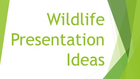Wildlife Presentation Ideas. Introduction  There are many ways to give a presentation. You could give a PowerPoint show, music video, video, demonstration,