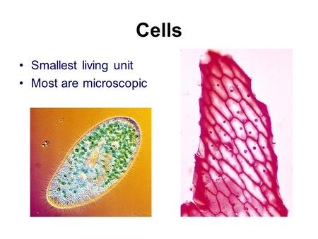 "Cells Smallest living unit Most are microscopic. Discovery of Cells Robert Hooke (mid-1600s) –Observed sliver of cork –Saw ""row of empty boxes"" –Coined."