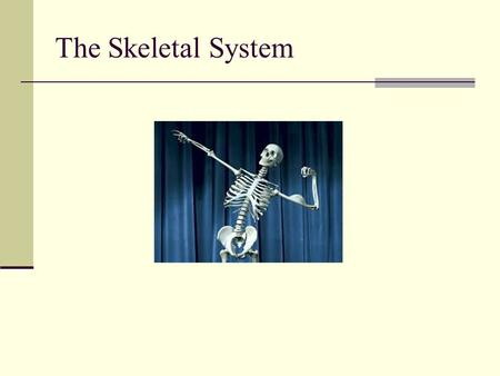 The Skeletal System. Skeletal System Functions of the skeletal system Framework Support/protect internal organs Body movement Provides leverage for lifting.