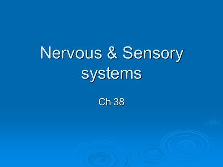 Nervous & Sensory systems Ch 38. 2 parts of Nervous System  CNS = Brain and main nerve cords  PNS = paired cranial and spinal nerves.