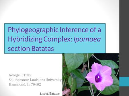 Phylogeographic Inference of a Hybridizing Complex: Ipomoea section Batatas George P. Tiley Southeastern Louisiana University Hammond, La 70402 I. sect.
