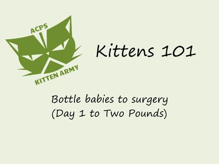 Kittens 101 Bottle babies to surgery (Day 1 to Two Pounds)