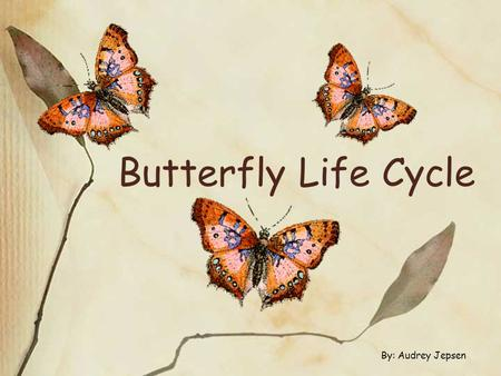 Butterfly Life Cycle By: Audrey Jepsen. The metamorphosis of a BUTTERFLY begins with… The Egg (Stage 1)