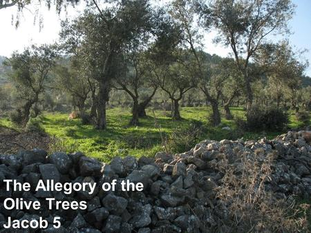 The Allegory of the Olive Trees Jacob 5. Jacob quotes Zenos Who Was Zenos? Prophet after Abraham, Isaac and Jacob House of Joseph (3 Nephi 10:15) Writings.
