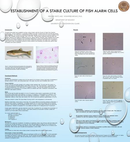 ESTABLISHMENT OF A STABLE CULTURE OF FISH ALARM CELLS HEATHER HINTZ AND WINNIFRED BRYANT, PH.D. DEPARTMENT OF BIOLOGY UNIVERSITY OF WISCONSIN-EAU CLAIRE.