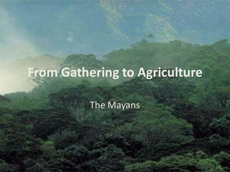 "From Gathering to Agriculture The Mayans. Why Farming? ""In their twilight days, the Maya were a society in deep trouble, according to the authors of the."