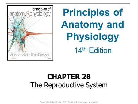 CHAPTER 28 The Reproductive System Principles of Anatomy and Physiology 14 th Edition Copyright © 2014 John Wiley & Sons, Inc. All rights reserved.