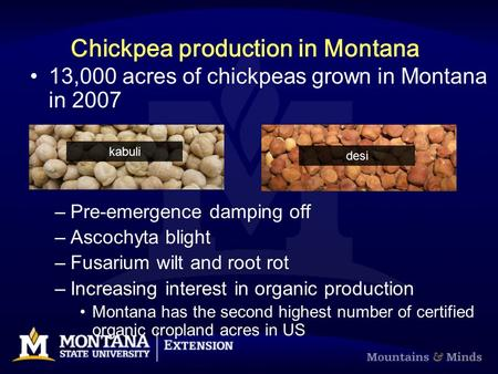 Chickpea production in Montana 13,000 acres of chickpeas grown in Montana in 2007 –Pre-emergence damping off –Ascochyta blight –Fusarium wilt and root.