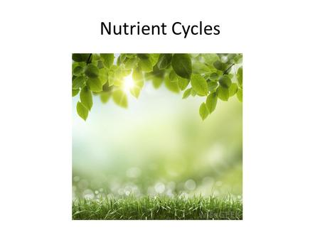 Nutrient Cycles. Nutrients circulate through ecosystems Matter is continually circulated in ecosystems Nutrient (biogeochemical) cycles – the movement.