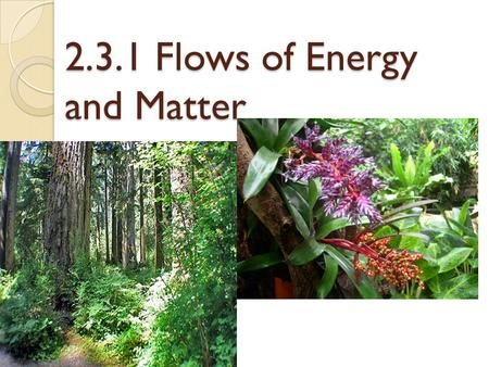 2.3.1 Flows of Energy and Matter. Transfer and transformation of Energy Not all solar radiation ends up as biomass. Losses include: ◦ Reflection from.
