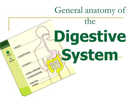 General anatomy of the Digestive System