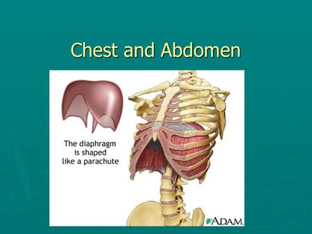 Chest and Abdomen. The Thoracic Cage (Rib Cage) ► Rib Cage-12 PAIRS OF RIBS  True Ribs (1-7)  False Ribs (8-10)  Floating Ribs (11 & 12)  Sternum.