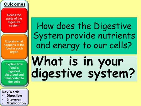 Explain what happens to the food in each organ Explain how food is digested, absorbed and transported to the cells Outcomes Recall the parts of the digestive.