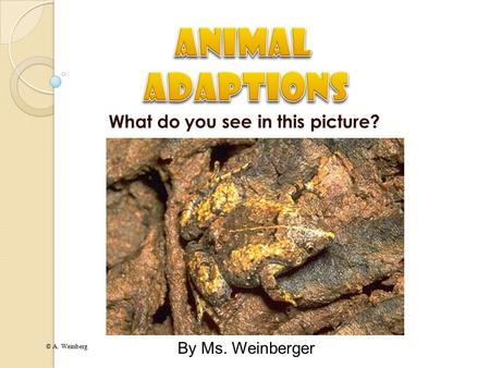 © A. Weinberg What do you see in this picture? By Ms. Weinberger.