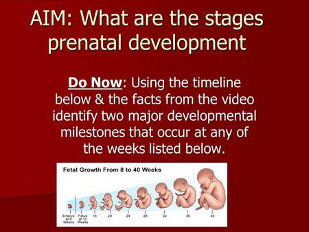 AIM: What are the stages prenatal development Do Now: Using the timeline below & the facts from the video identify two major developmental milestones that.
