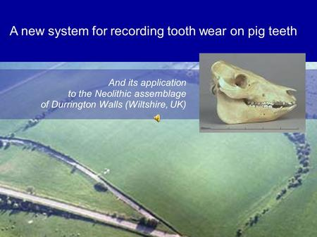 A new system for recording tooth wear on pig teeth And its application to the Neolithic assemblage of Durrington Walls (Wiltshire, UK)