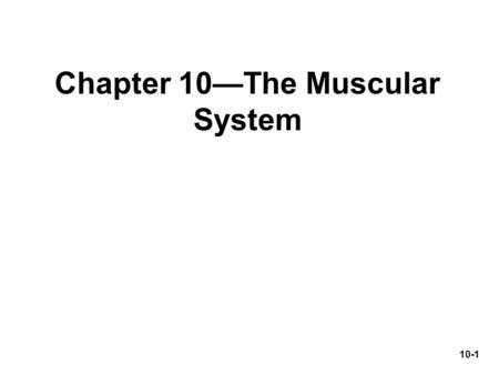 Chapter 10—The Muscular System 10-1. I. Introduction & connective tissues of a muscle 10-2.