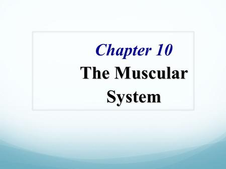 The Muscular System Chapter 10 The Muscular System.