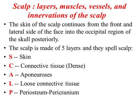 Scalp : layers, muscles, vessels, and innervations of the scalp The skin of the scalp continues from the front and lateral side of the face into the occipital.