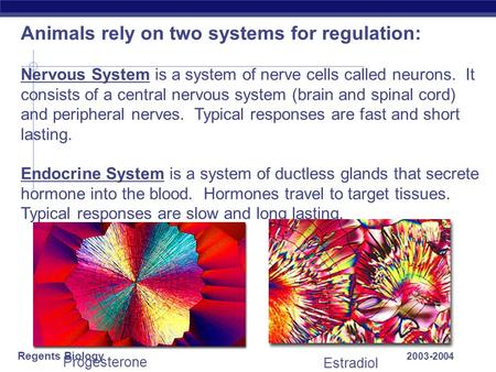 Regents Biology 2003-2004 Animals rely on two systems for regulation: Nervous System is a system of nerve cells called neurons. It consists of a central.