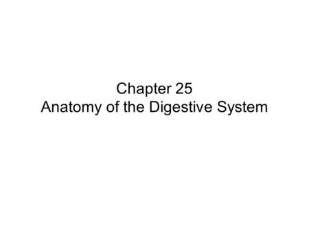 Chapter 25 Anatomy of the Digestive System. Overview of the Digestive System Role of the digestive system –Prepares food for absorption and use by all.