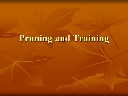 Pruning and Training. Link Training to Productivity Productivity is all about - Quality - Quantity - Price - Timing to Market All the areas of training.