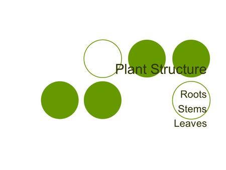 Plant Structure Roots Stems Leaves. Plant Organs Roots Stems Leaves.
