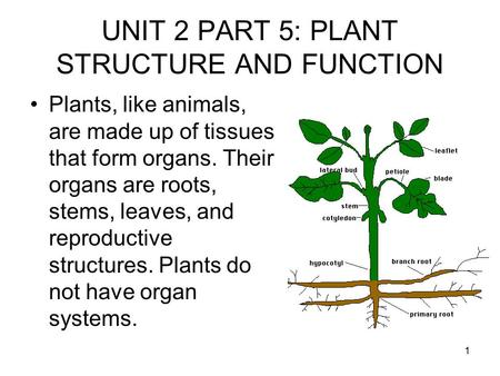 1 UNIT 2 PART 5: PLANT STRUCTURE AND FUNCTION Plants, like animals, are made up of tissues that form organs. Their organs are roots, stems, leaves, and.
